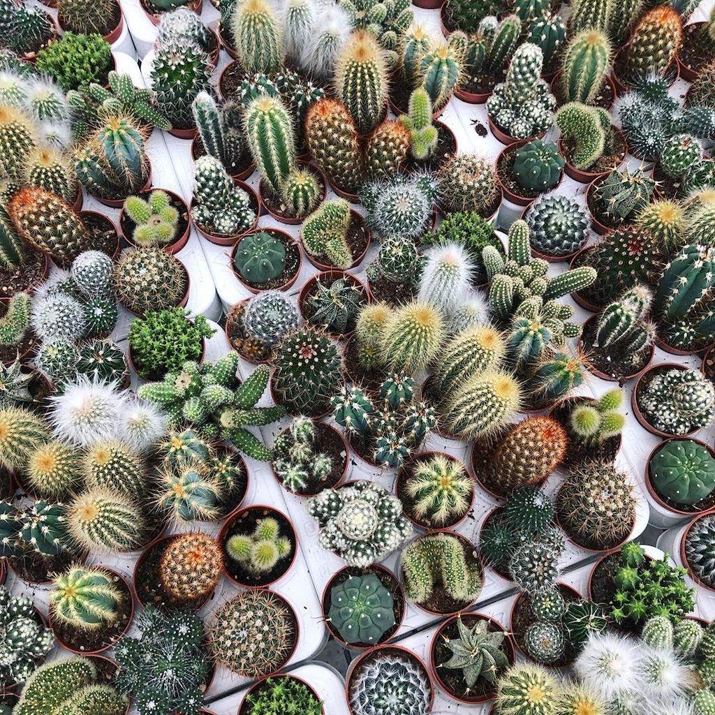 7 Tips To Keep Your Small Succulents And Cacti Alive And Thriving